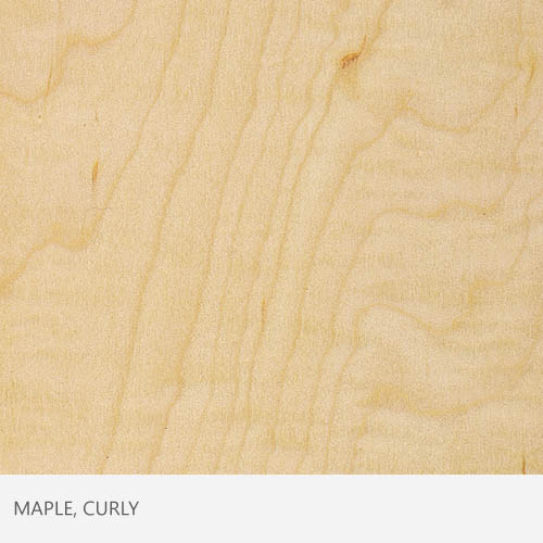 Maple Curly